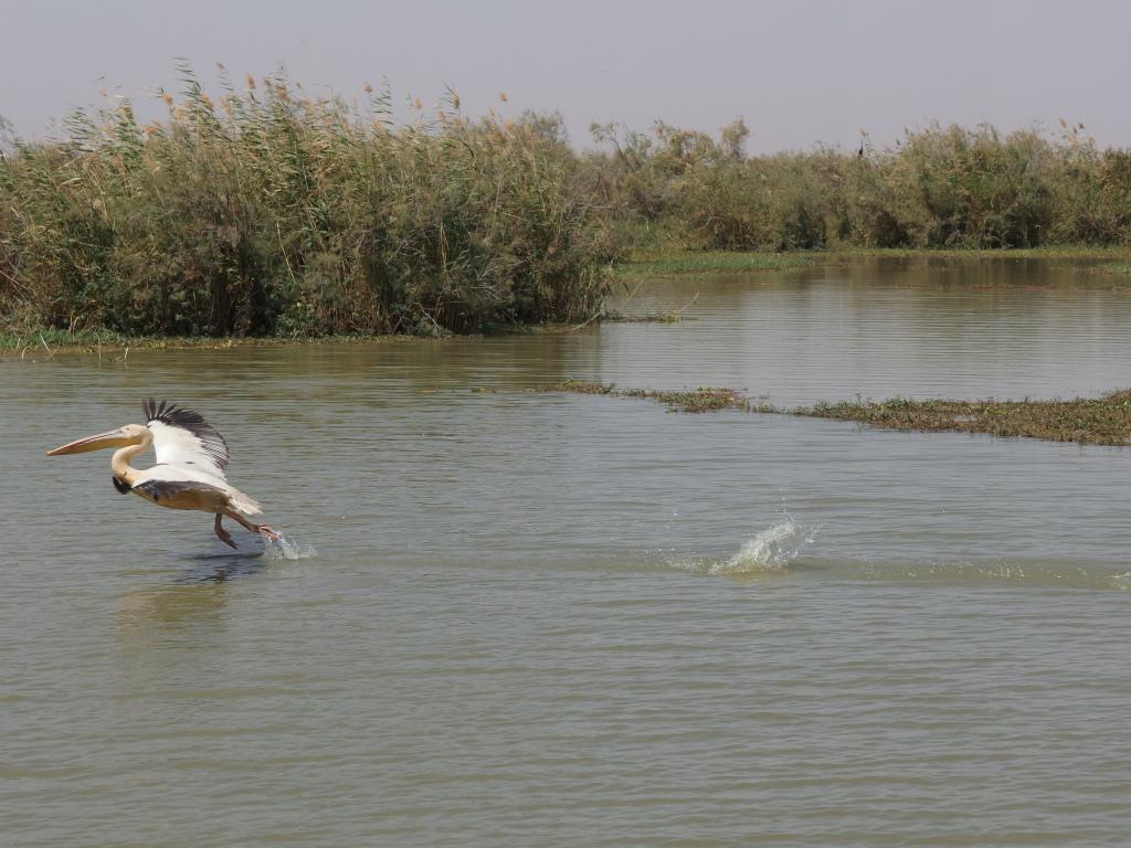 【2017年】セネガル サンルイ2日目「ジュッジ鳥類国立公園」